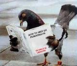 a pigeon reading a lesson book on how to poop on people